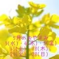 菜の花のアップに5月の休業日のお知らせ