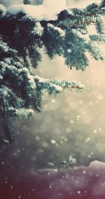モミの木と雪