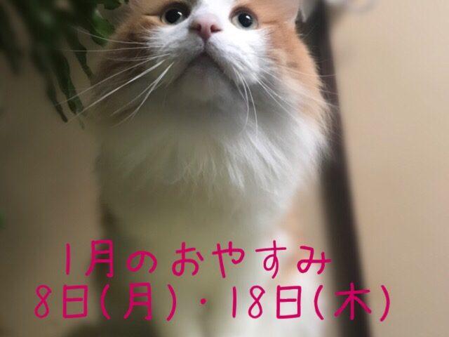座っている猫に今月の休みの記載