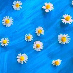 水色の背景に白いお花